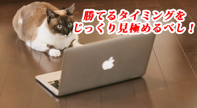 取引タイミングを見極める猫