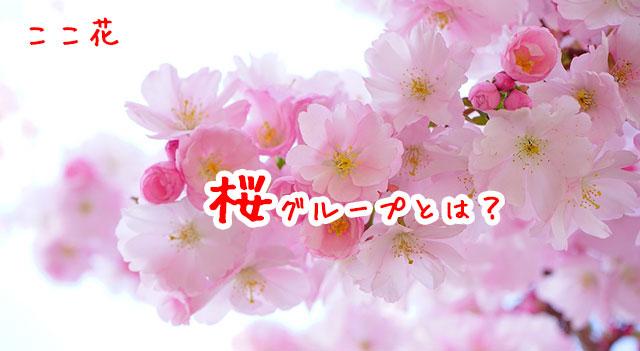 月額5万円グループの「桜」