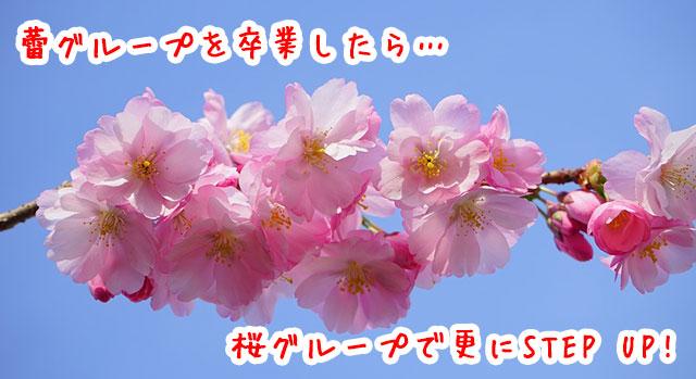 蕾グループを卒業したら桜グループで更にステップアップ?